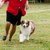 20161120_Greater Sierra Vista Kennel Club_Aussies-352