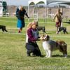 20161119_Tucson Kennel Club_Aussies-112