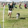 20161119_Tucson Kennel Club_Aussies-121-2