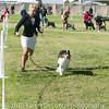 20161119_Tucson Kennel Club_Aussies-122