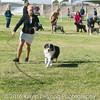 20161119_Tucson Kennel Club_Aussies-119