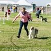 20161119_Tucson Kennel Club_Aussies-130