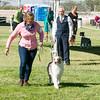 20161119_Tucson Kennel Club_Aussies-129