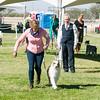20161119_Tucson Kennel Club_Aussies-128