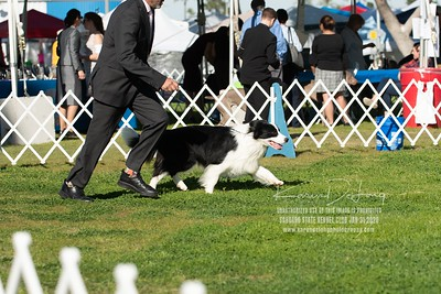 20200131_BCCAZ Speciality_Border Collies_KDP_6190