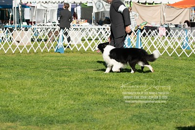 20200131_BCCAZ Speciality_Border Collies_KDP_6184