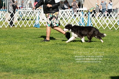 20200131_BCCAZ Speciality_Border Collies_KDP_6169