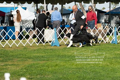 20200131_BCCAZ Speciality_Border Collies_KDP_6198