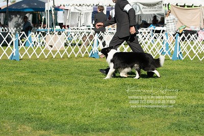20200131_BCCAZ Speciality_Border Collies_KDP_6186