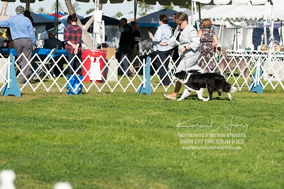 20200131_BCCAZ Speciality_Border Collies_KDP_6131