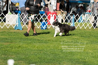 20200131_BCCAZ Speciality_Border Collies_KDP_6152