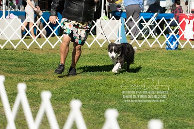 20200131_BCCAZ Speciality_Border Collies_KDP_6159