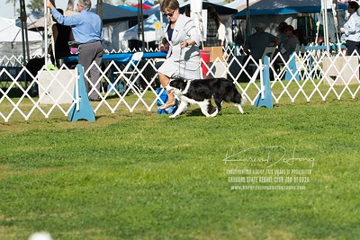 20200131_BCCAZ Speciality_Border Collies_KDP_6172
