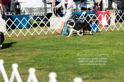 20200131_BCCAZ Speciality_Border Collies_KDP_6176