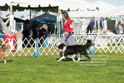 20200131_BCCAZ Speciality_Border Collies_KDP_6110
