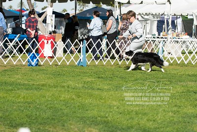 20200131_BCCAZ Speciality_Border Collies_KDP_6129