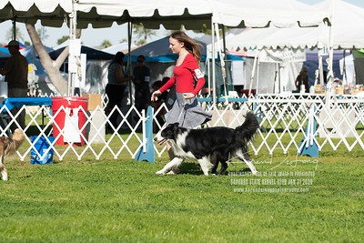 20200131_BCCAZ Speciality_Border Collies_KDP_6112