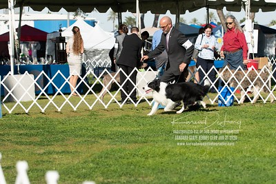 20200131_BCCAZ Speciality_Border Collies_KDP_6200