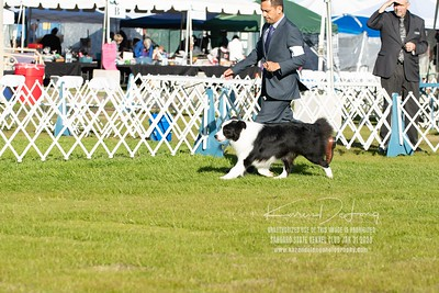 20200131_Sahuaro State Kennel Club_Border Collies_KDP_5108