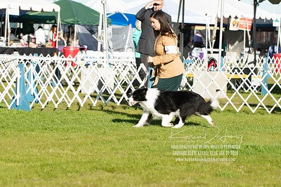 20200131_Sahuaro State Kennel Club_Border Collies_KDP_5097