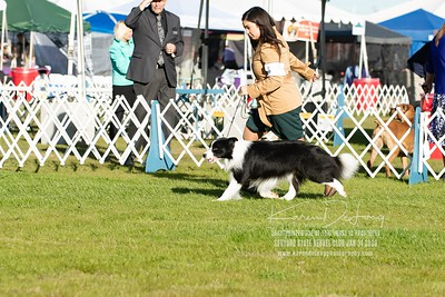 20200131_Sahuaro State Kennel Club_Border Collies_KDP_5095
