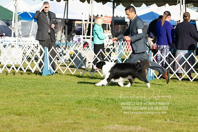 20200131_Sahuaro State Kennel Club_Border Collies_KDP_5103