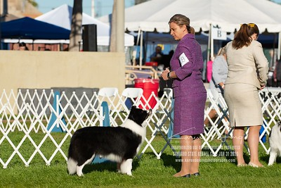 20200131_Sahuaro State Kennel Club_Border Collies_KDP_5146