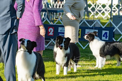20200131_Sahuaro State Kennel Club_Border Collies_KDP_5079