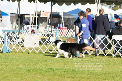 20200131_Sahuaro State Kennel Club_Border Collies_KDP_5086