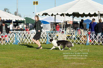 20200131_Sahuaro State Kennel Club_Border Collies_KDP_5073