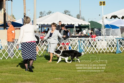 20200131_Sahuaro State Kennel Club_Border Collies_KDP_5071
