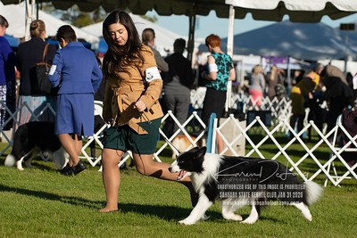 20200131_Sahuaro State Kennel Club_Border Collies_KDP_5150