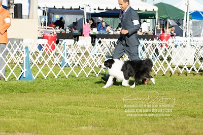 20200131_Sahuaro State Kennel Club_Border Collies_KDP_5110