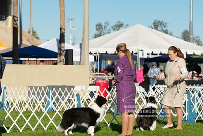 20200131_Sahuaro State Kennel Club_Border Collies_KDP_5142