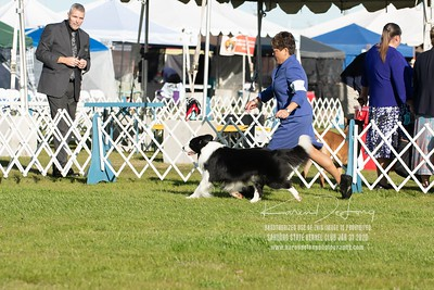 20200131_Sahuaro State Kennel Club_Border Collies_KDP_5088
