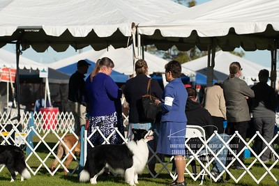 20200131_Sahuaro State Kennel Club_Border Collies_KDP_5140