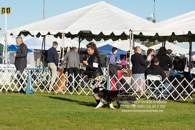 20200131_Sahuaro State Kennel Club_Border Collies_KDP_5043