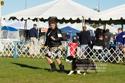20200131_Sahuaro State Kennel Club_Border Collies_KDP_5054