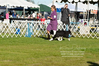 20200131_Sahuaro State Kennel Club_Border Collies_KDP_5115
