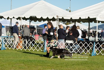 20200131_Sahuaro State Kennel Club_Border Collies_KDP_5041