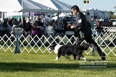 20200201_Sahuaro State Kennel Club_Border Collies_KDP_8504