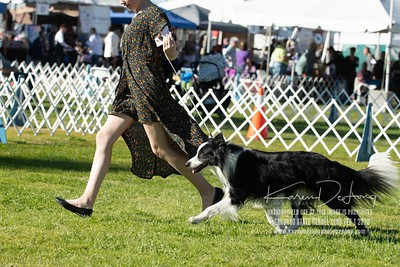 20200201_Sahuaro State Kennel Club_Border Collies_KDP_8400