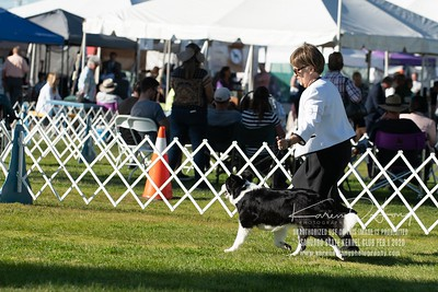 20200201_Sahuaro State Kennel Club_Border Collies_KDP_8534