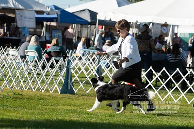 20200201_Sahuaro State Kennel Club_Border Collies_KDP_8538
