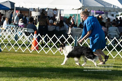 20200201_Sahuaro State Kennel Club_Border Collies_KDP_8520