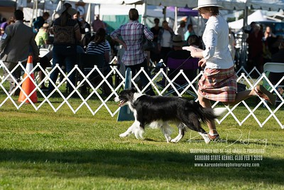 20200201_Sahuaro State Kennel Club_Border Collies_KDP_8542