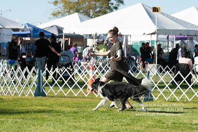 20200201_Sahuaro State Kennel Club_Border Collies_KDP_8392