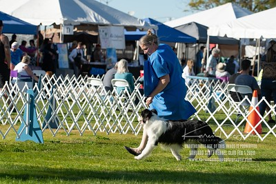 20200201_Sahuaro State Kennel Club_Border Collies_KDP_8524