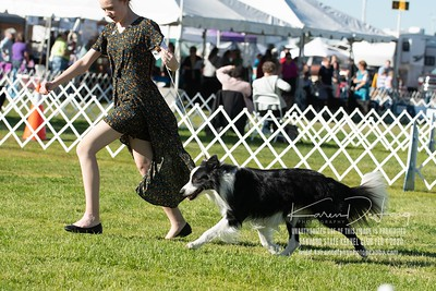 20200201_Sahuaro State Kennel Club_Border Collies_KDP_8396