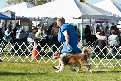 20200201_Sahuaro State Kennel Club_Border Collies_KDP_8425